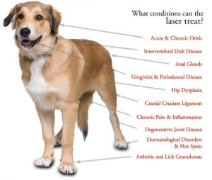 Passive Income for Veterinarians - Photobiomodulation The Miracle of Healing Light