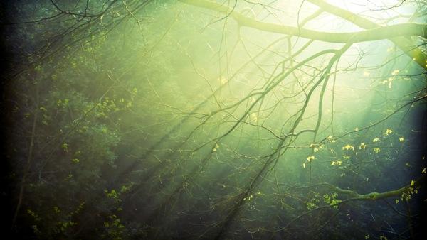 7000392-forest-sunlight